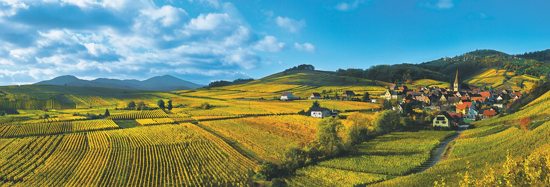 Grand Cru Alsace vineyard and village