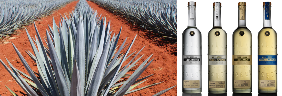Agave plant + Tequila bottles