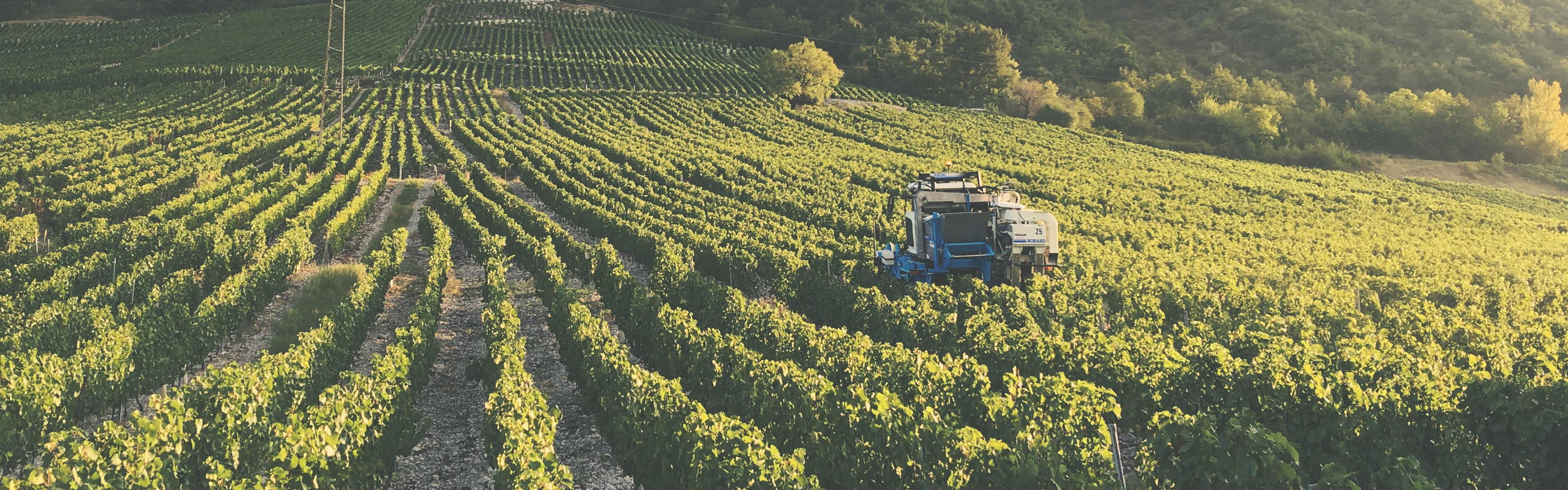 Jean Perrier harvest 2018